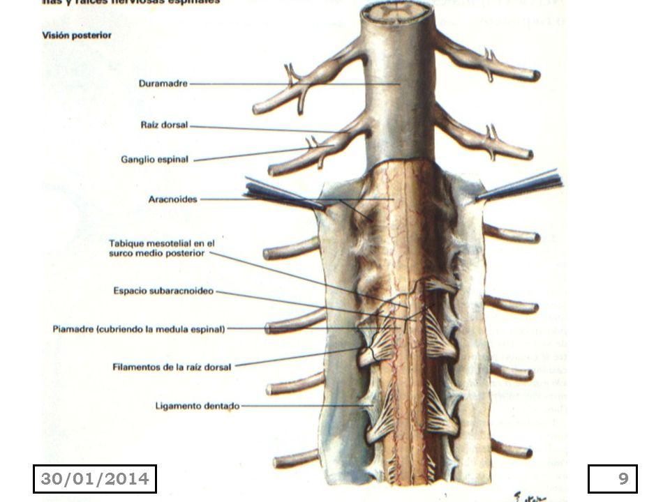 Causas predisponentes Carcinoma metastásico.Infarto de la arteria espinal anterior.