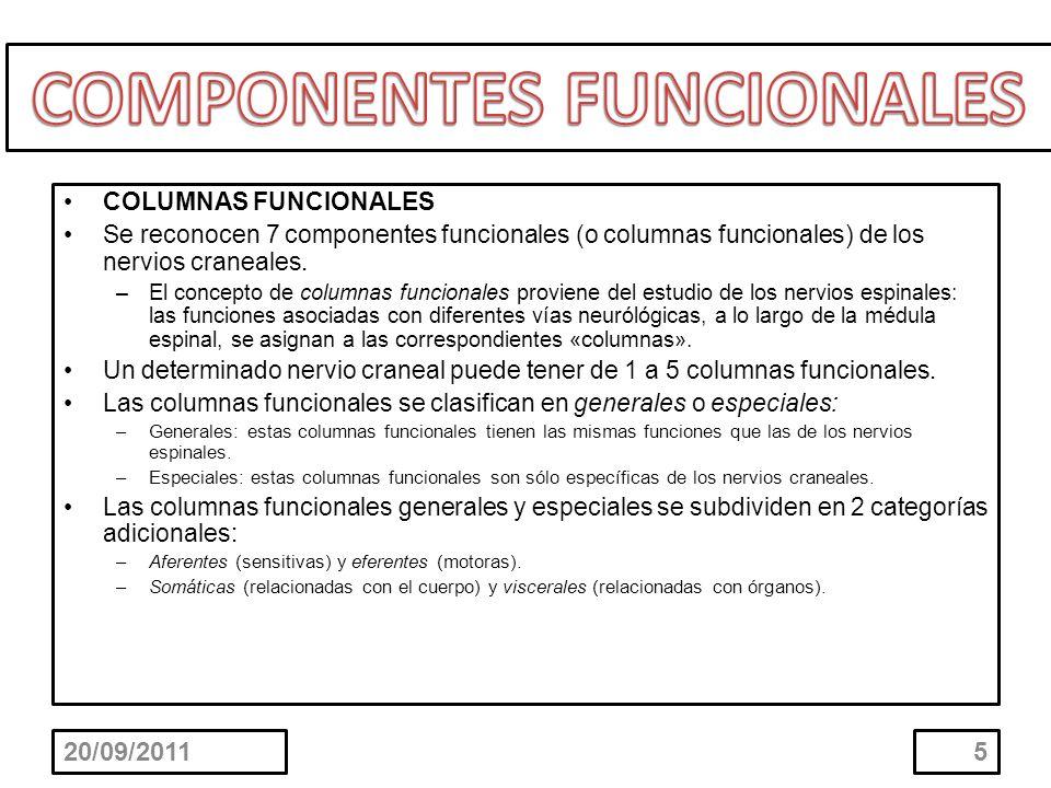 COLUMNAS FUNCIONALES Se reconocen 7 componentes funcionales (o columnas funcionales) de los nervios craneales. –El concepto de columnas funcionales pr