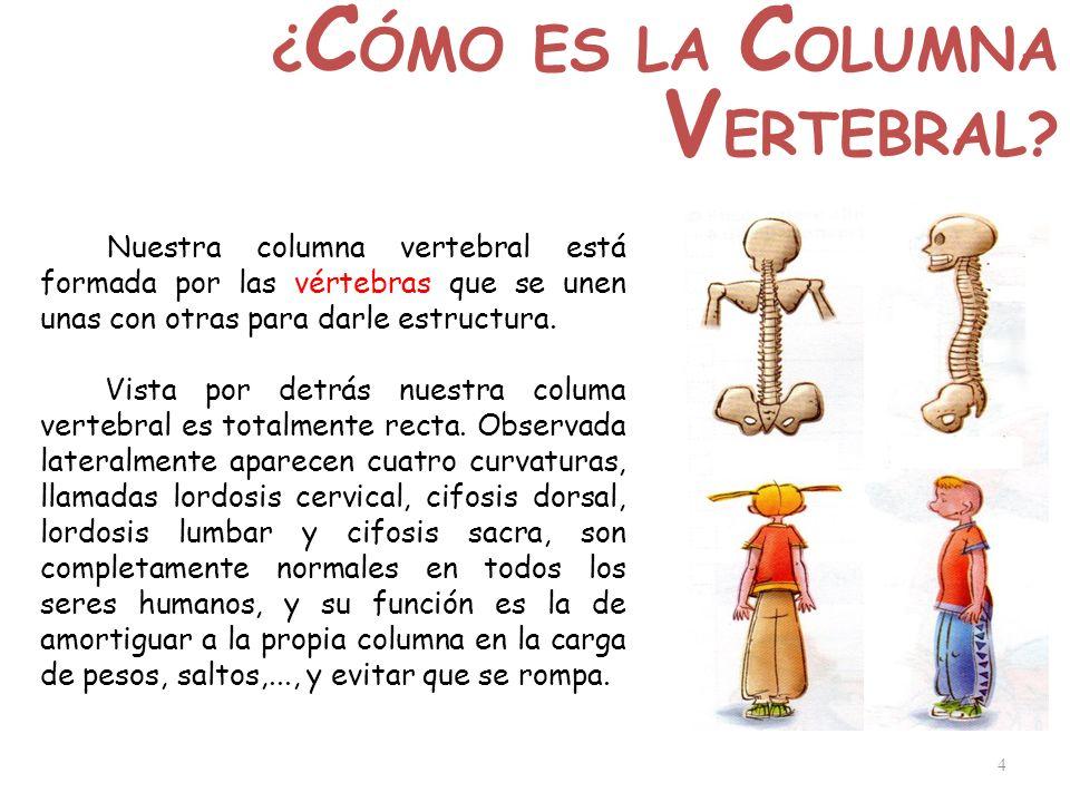 4 ¿ C ÓMO ES LA C OLUMNA V ERTEBRAL? Nuestra columna vertebral está formada por las vértebras que se unen unas con otras para darle estructura. Vista