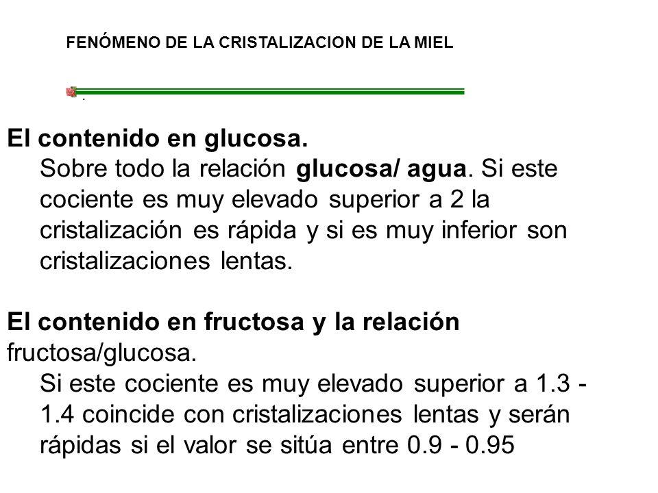 FENÓMENO DE LA CRISTALIZACION DE LA MIEL. El contenido en glucosa. Sobre todo la relación glucosa/ agua. Si este cociente es muy elevado superior a 2