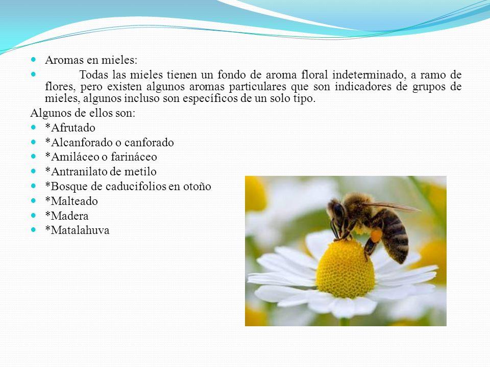 Aromas en mieles: Todas las mieles tienen un fondo de aroma floral indeterminado, a ramo de flores, pero existen algunos aromas particulares que son i