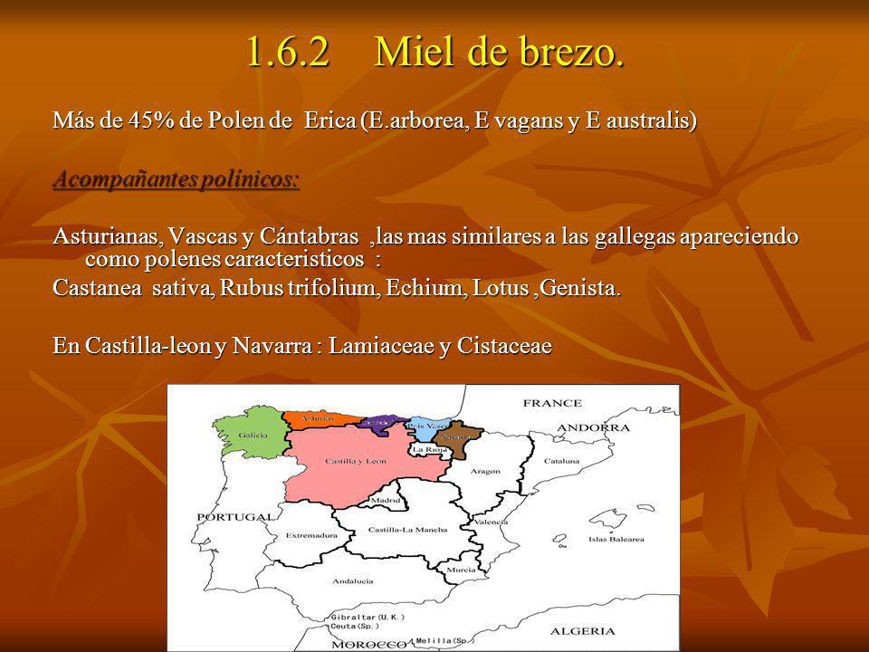 1.6.2 Miel de brezo. Más de 45% de Polen de Erica (E.arborea, E vagans y E australis) Acompañantes polínicos: Asturianas, Vascas y Cántabras,las mas s