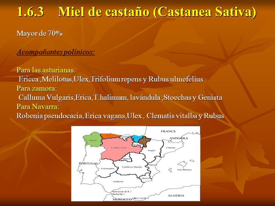 1.6.3 Miel de castaño (Castanea Sativa) Mayor de 70% Acompañantes polínicos: Para las asturianas: Ericca,Melilotus,Ulex,Trifolium repens y Rubus ulmef