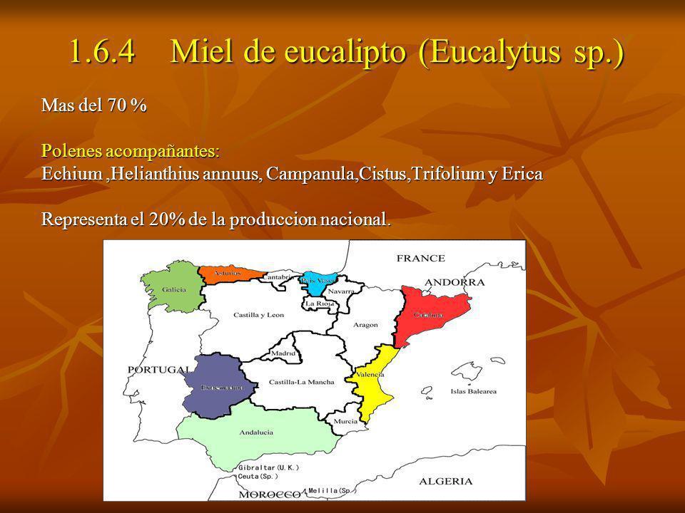 1.6.4 Miel de eucalipto (Eucalytus sp.) 1.6.4 Miel de eucalipto (Eucalytus sp.) Mas del 70 % Polenes acompañantes: Echium,Helianthius annuus, Campanul