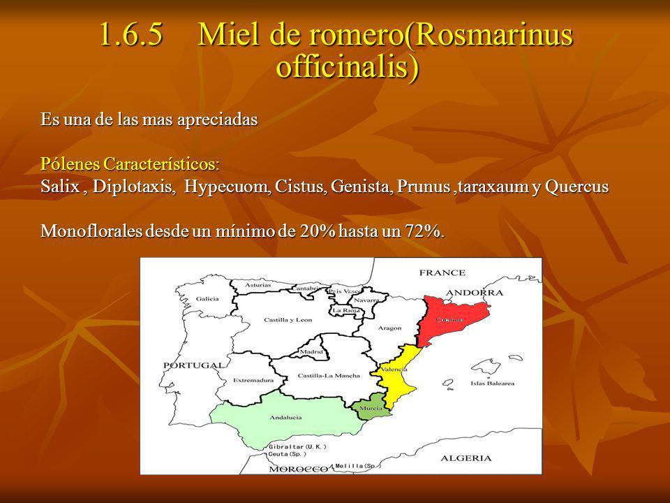 1.6.5 Miel de romero(Rosmarinus officinalis) Es una de las mas apreciadas Pólenes Característicos: Salix, Diplotaxis, Hypecuom, Cistus, Genista, Prunu