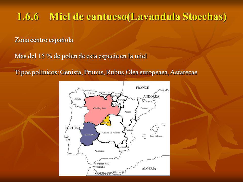1.6.6 Miel de cantueso(Lavandula Stoechas) Zona centro española Mas del 15 % de polen de esta especie en la miel Tipos polínicos: Genista, Prunus, Rub