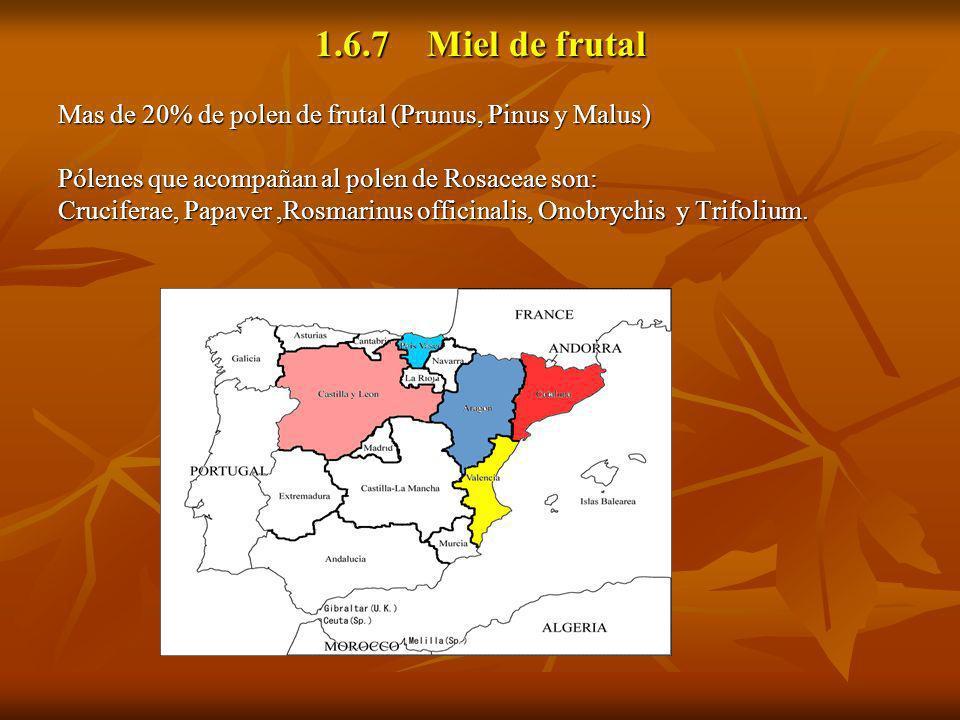 1.6.7 Miel de frutal Mas de 20% de polen de frutal (Prunus, Pinus y Malus) Pólenes que acompañan al polen de Rosaceae son: Cruciferae, Papaver,Rosmari