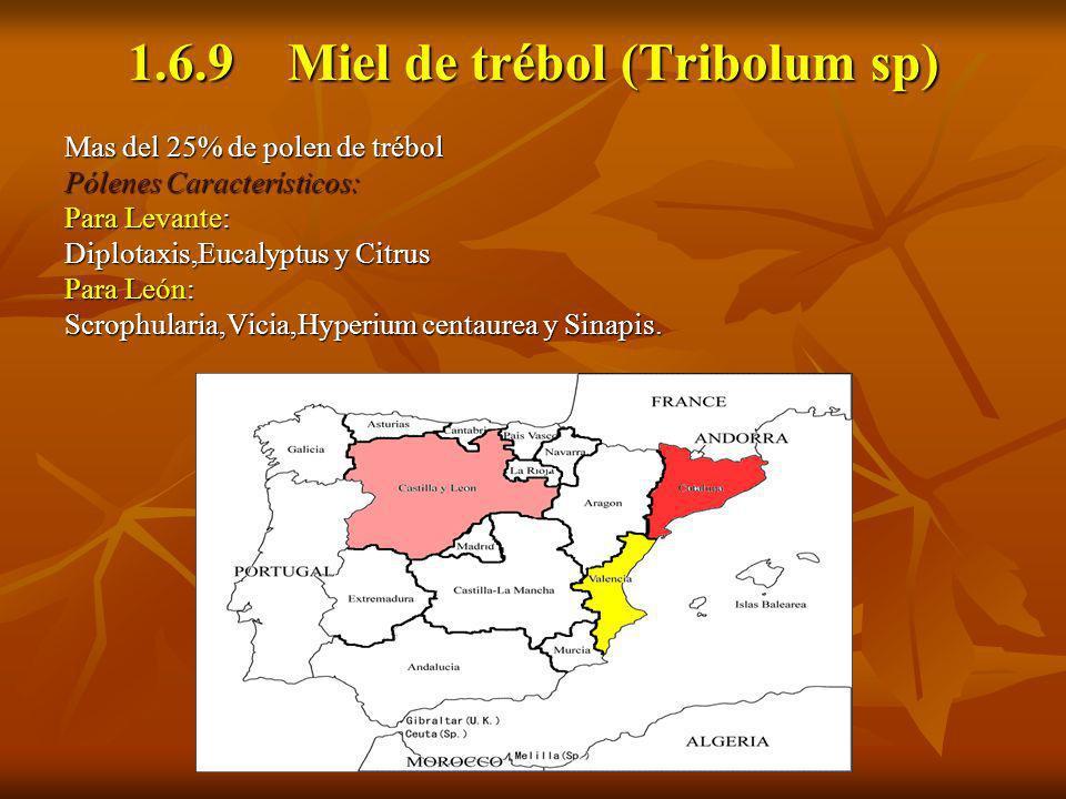 1.6.9 Miel de trébol (Tribolum sp) Mas del 25% de polen de trébol Pólenes Característicos: Para Levante: Diplotaxis,Eucalyptus y Citrus Para León: Scr