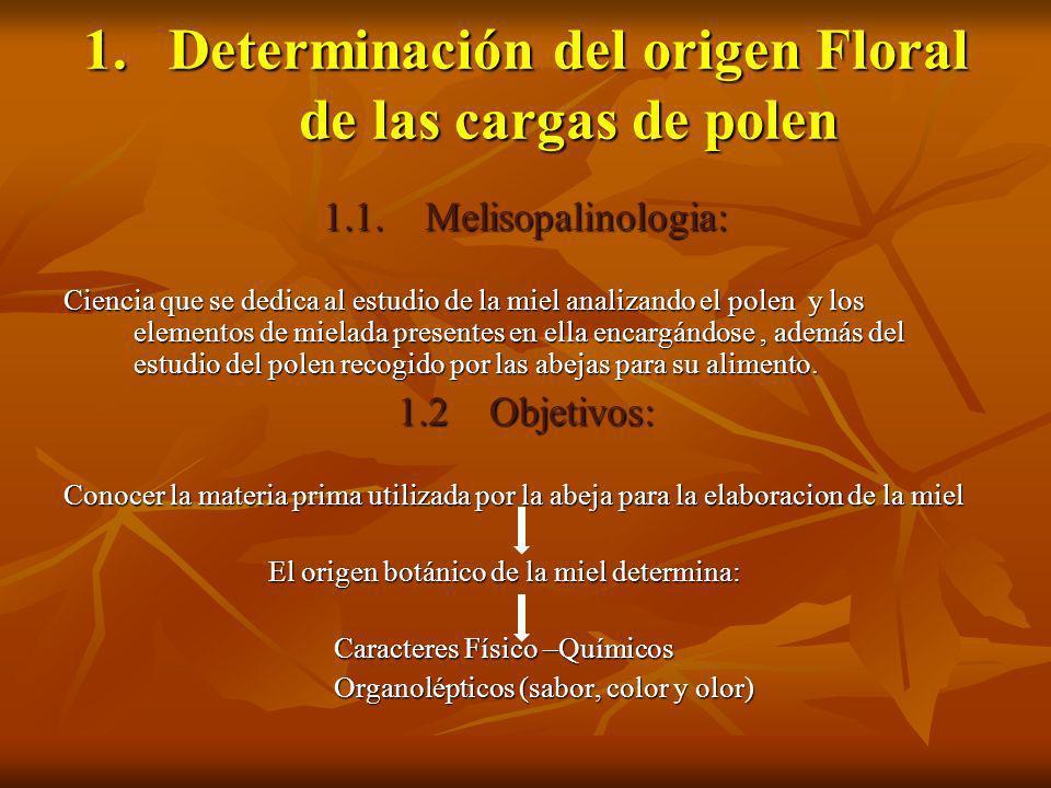 1.Determinación del origen Floral de las cargas de polen 1.1. Melisopalinologia: Ciencia que se dedica al estudio de la miel analizando el polen y los