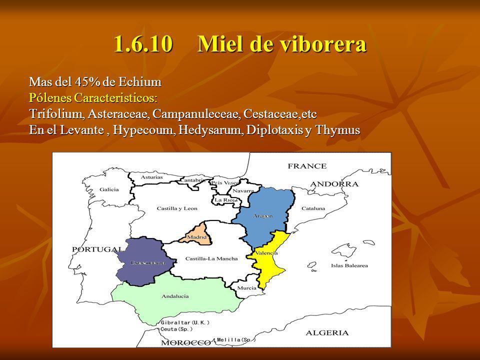 1.6.10 Miel de viborera Mas del 45% de Echium Pólenes Caracteristicos: Trifolium, Asteraceae, Campanuleceae, Cestaceae,etc En el Levante, Hypecoum, He