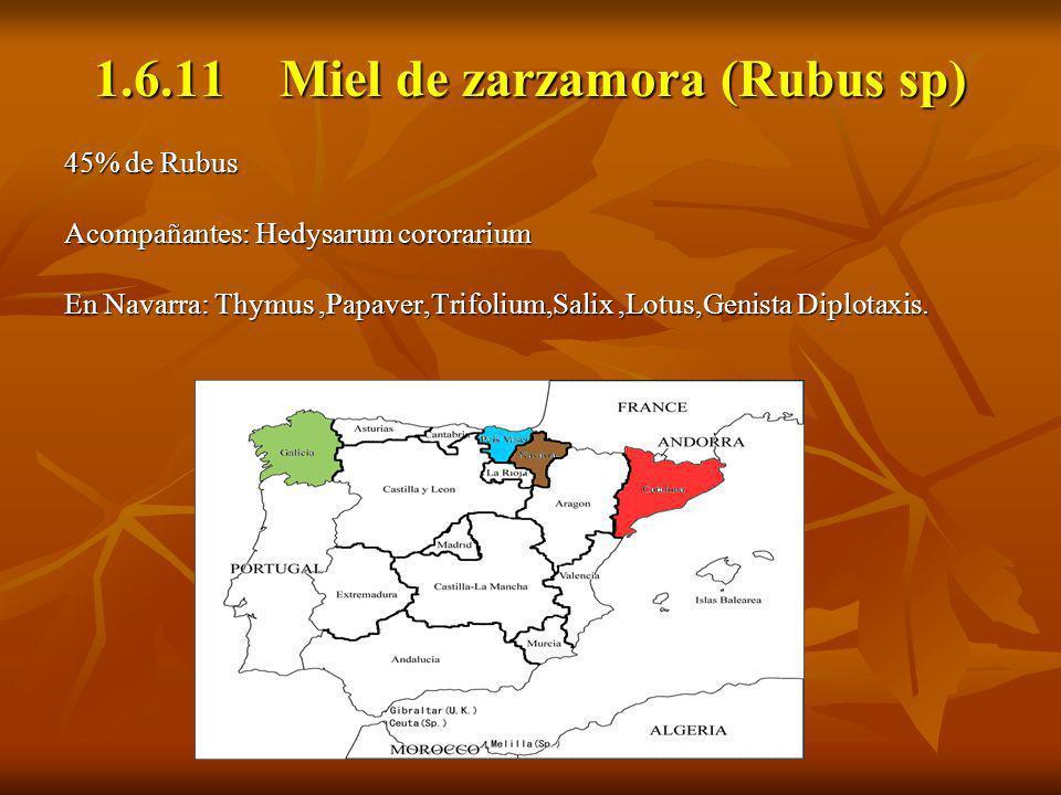 1.6.11 Miel de zarzamora (Rubus sp) 45% de Rubus Acompañantes: Hedysarum cororarium En Navarra: Thymus,Papaver,Trifolium,Salix,Lotus,Genista Diplotaxi