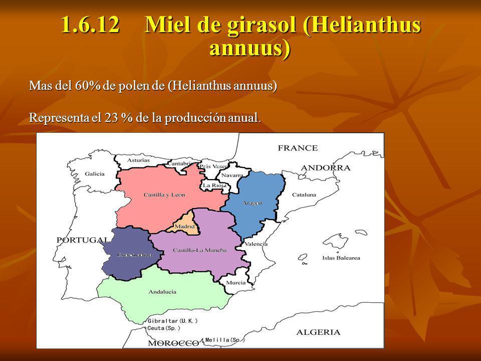1.6.12 Miel de girasol (Helianthus annuus) Mas del 60% de polen de (Helianthus annuus) Representa el 23 % de la producción anual.