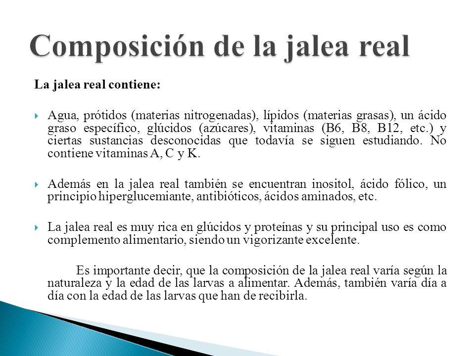 La jalea real contiene: Agua, prótidos (materias nitrogenadas), lípidos (materias grasas), un ácido graso específico, glúcidos (azúcares), vitaminas (