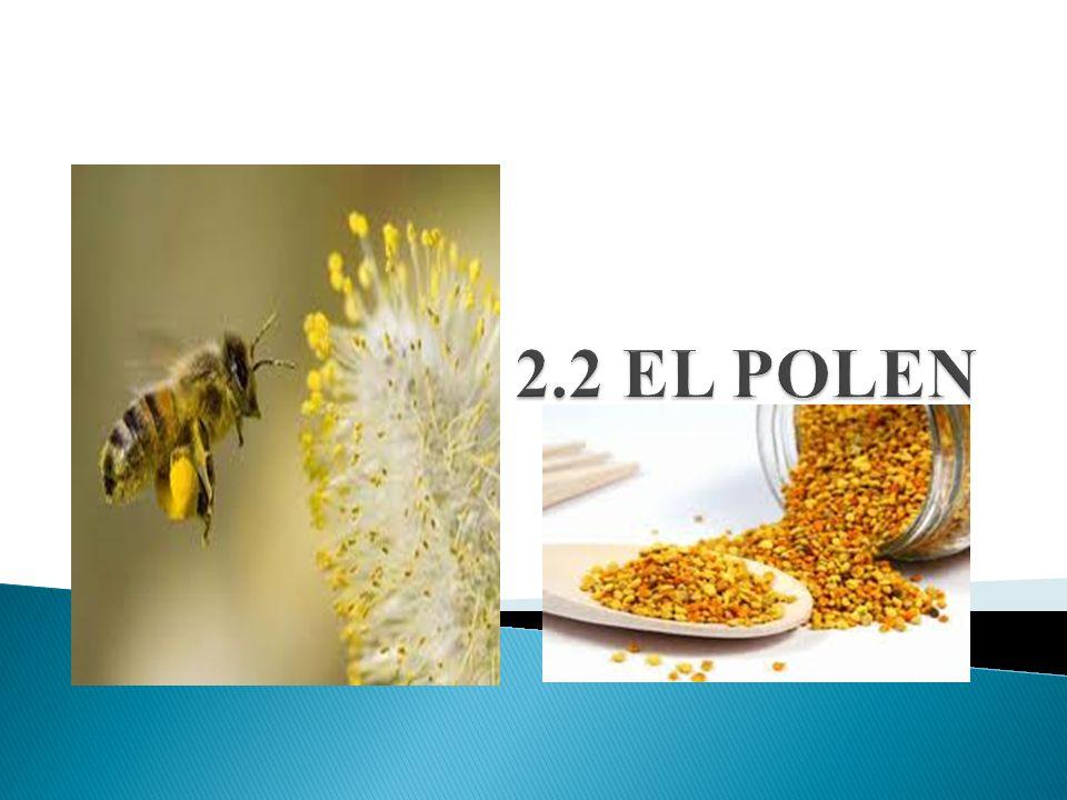 Las abejas recolectan el polen de la parte masculina de las flores, lo amasan con un poco de néctar o miel y lo transportan a la colmena en su tercer par de patas, que está especialmente adaptado para dar cabida a esas bolitas multicolores, en las que se presenta habitualmente este producto en el comercio.