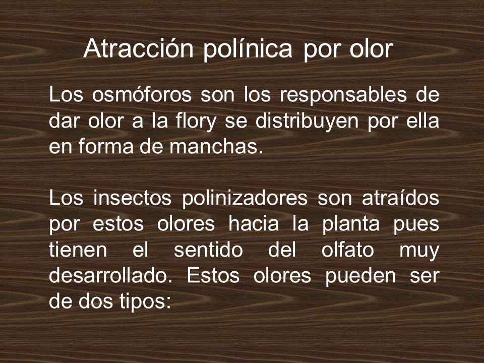 8.Apicultura y cítricos valencianos.