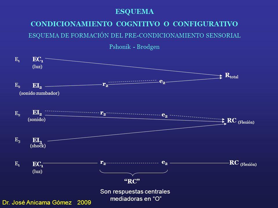ESQUEMA CONDICIONAMIENTO COGNITIVO O CONFIGURATIVO ESQUEMA DE FORMACIÓN DEL PRE-CONDICIONAMIENTO SENSORIAL Pshonik - Brodgen E1E1 E2E2 E3E3 E1E1 E2E2