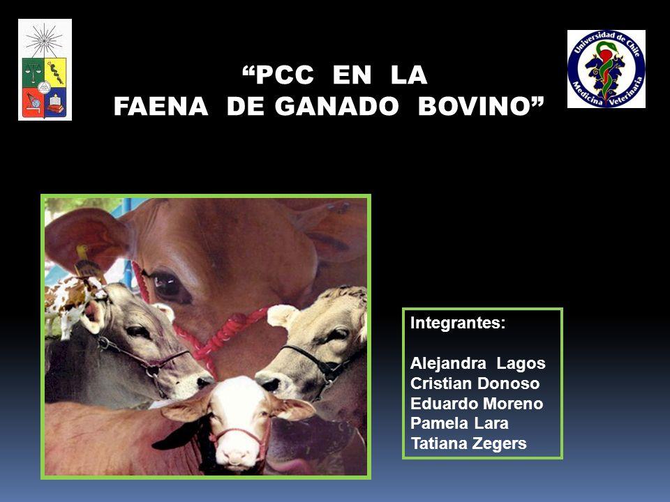 Integrantes: Alejandra Lagos Cristian Donoso Eduardo Moreno Pamela Lara Tatiana Zegers PCC EN LA FAENA DE GANADO BOVINO