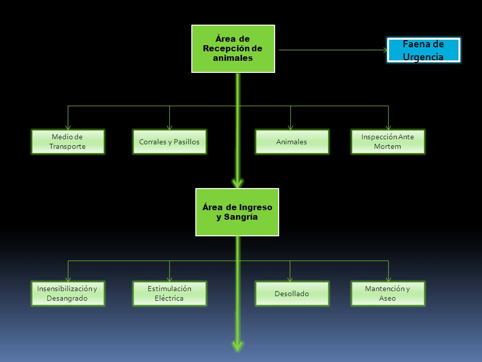Área de Recepción de animales Medio de Transporte Corrales y PasillosAnimales Inspección Ante Mortem Faena de Urgencia Área de Ingreso y Sangría Desollado Estimulación Eléctrica Insensibilización y Desangrado Mantención y Aseo