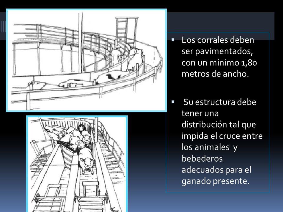 Los corrales deben ser pavimentados, con un mínimo 1,80 metros de ancho.