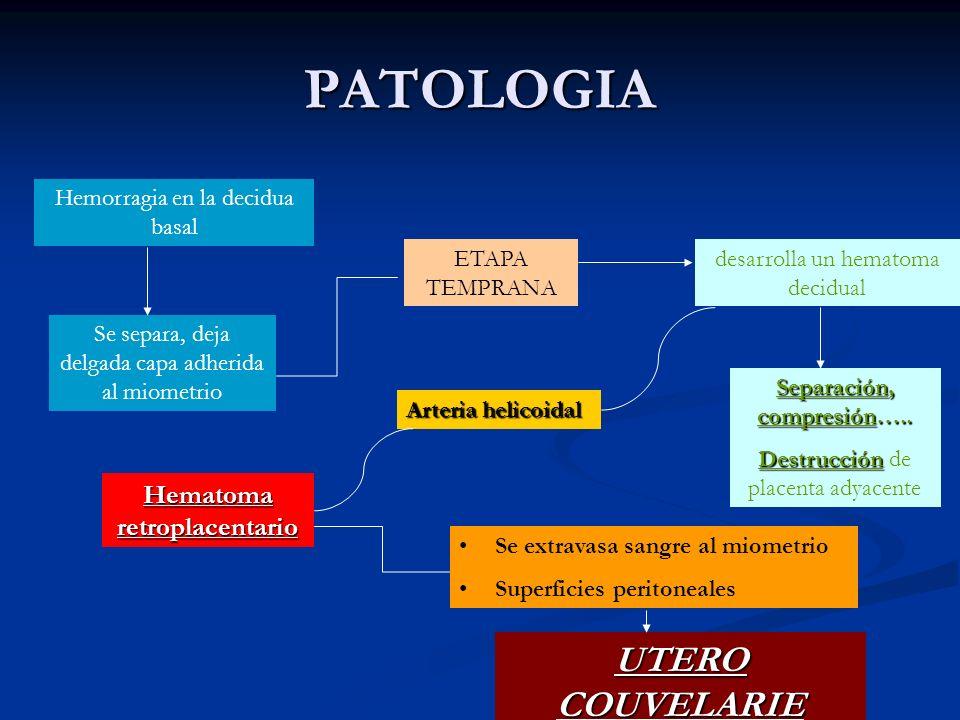 PATOLOGIA Hemorragia en la decidua basal Se separa, deja delgada capa adherida al miometrio ETAPA TEMPRANA desarrolla un hematoma decidual Separación,