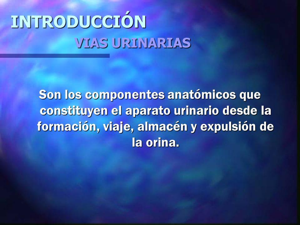 VIAS URINARIAS SUPERIORES VIAS URINARIAS INFERIORES RIÑÓN.