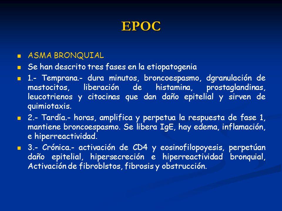 EPOC ASMA BRONQUIAL Se han descrito tres fases en la etiopatogenia 1.- Temprana.- dura minutos, broncoespasmo, dgranulación de mastocitos, liberación