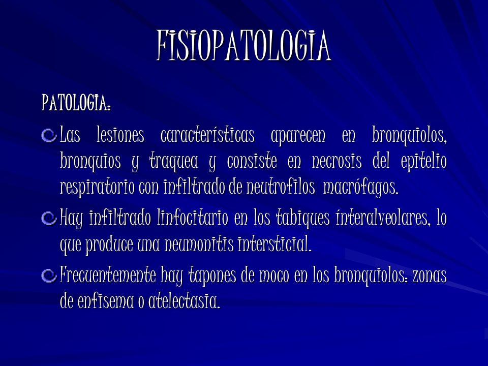 FISIOPATOLOGIA PATOLOGIA: Las lesiones características aparecen en bronquiolos, bronquios y traquea y consiste en necrosis del epitelio respiratorio c