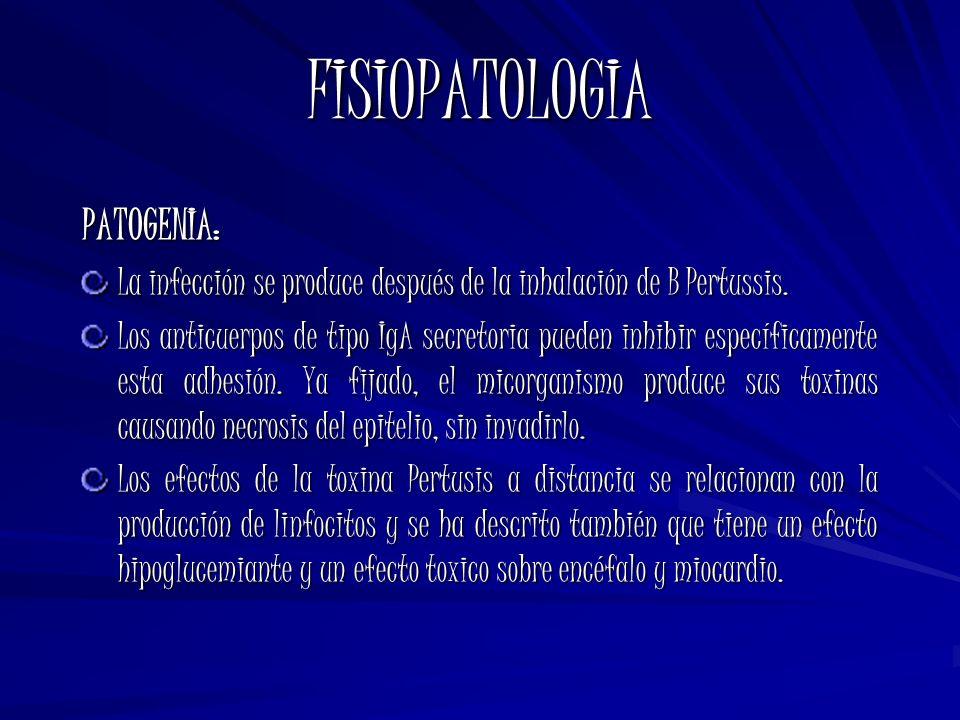 FISIOPATOLOGIA PATOGENIA: La infección se produce después de la inhalación de B Pertussis. Los anticuerpos de tipo IgA secretoria pueden inhibir espec