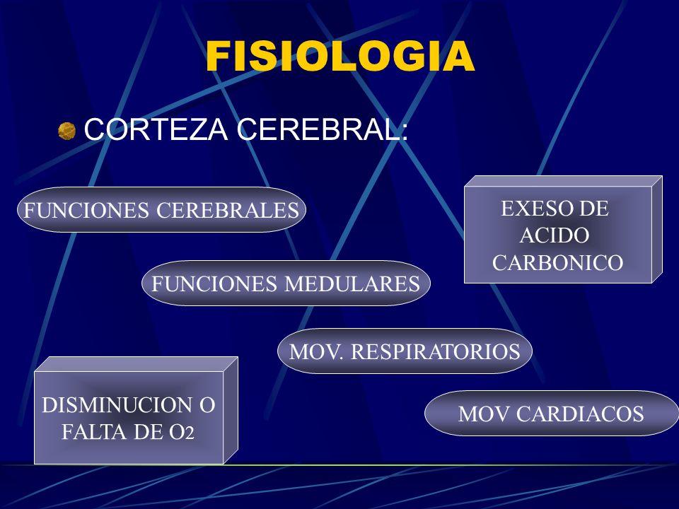 FISIOLOGIA CORTEZA CEREBRAL: FUNCIONES CEREBRALES FUNCIONES MEDULARES MOV. RESPIRATORIOS MOV CARDIACOS DISMINUCION O FALTA DE O 2 EXESO DE ACIDO CARBO