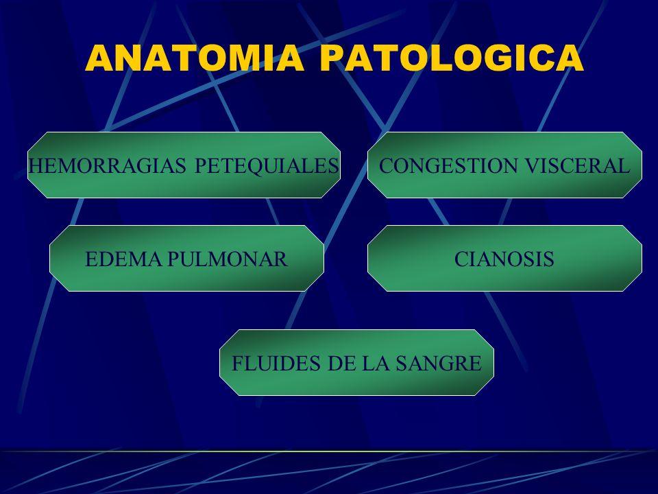 ANATOMIA PATOLOGICA HEMORRAGIAS PETEQUIALES FLUIDES DE LA SANGRE CIANOSISEDEMA PULMONAR CONGESTION VISCERAL