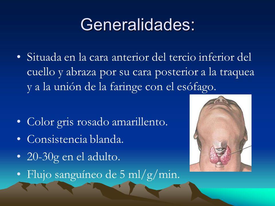Bocio Nodular no Toxico: Son multilobulados, asimétricos y producen aumentos del tamaño de la glándula hasta 2,000g Se produce hasta en 12% de los adultos.