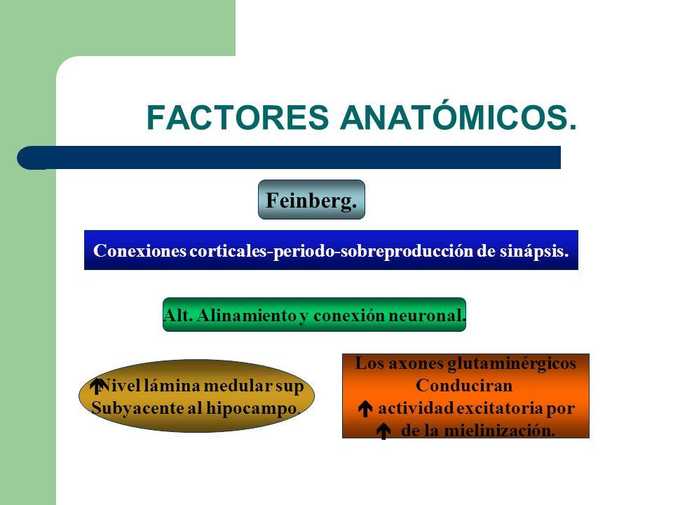 FACTORES ANATÓMICOS.Feinberg. Conexiones corticales-periodo-sobreproducción de sinápsis.
