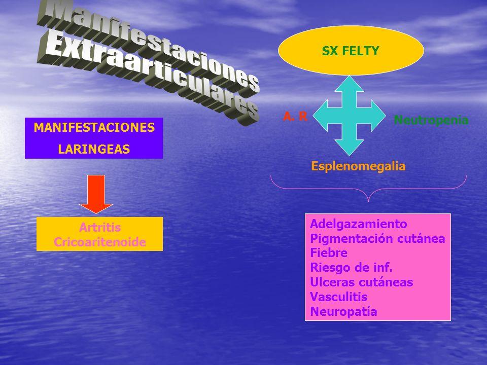 MANIFESTACIONES LARINGEAS Artritis Cricoaritenoide SX FELTY A. R Esplenomegalia Neutropenia Adelgazamiento Pigmentación cutánea Fiebre Riesgo de inf.