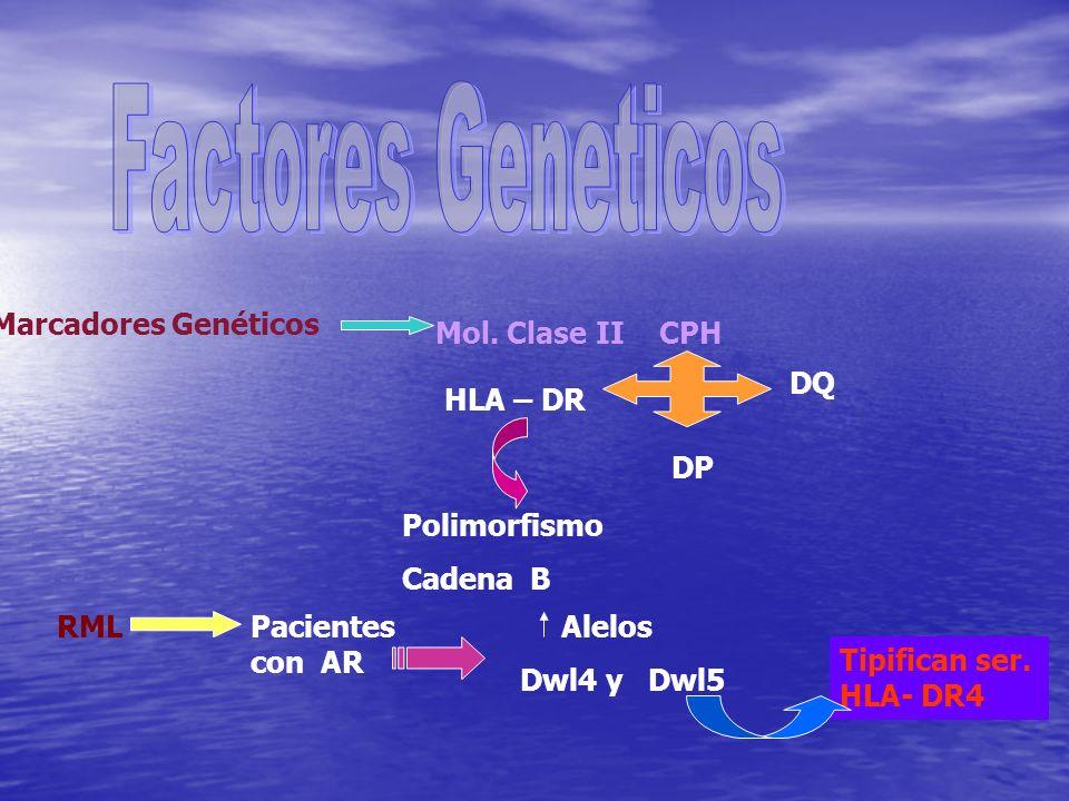 Marcadores Genéticos Mol. Clase II CPH HLA – DR DP DQ Polimorfismo Cadena B RMLPacientes con AR Alelos Dwl4 y Dwl5 Tipifican ser. HLA- DR4