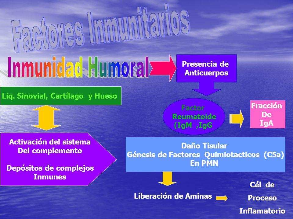 Presencia de Anticuerpos Factor Reumatoide (IgM,IgG Fracción De IgA Liq. Sinovial, Cartílago y Hueso Activación del sistema Del complemento Depósitos