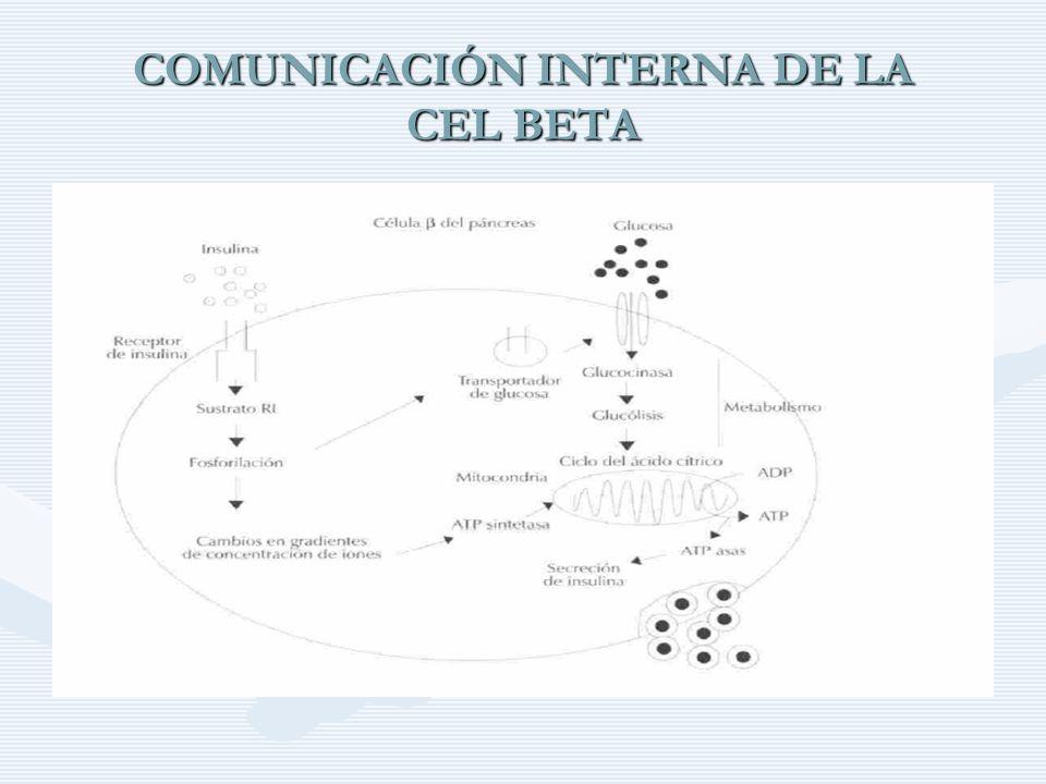 COMUNICACIÓN INTERNA DE LA CEL BETA