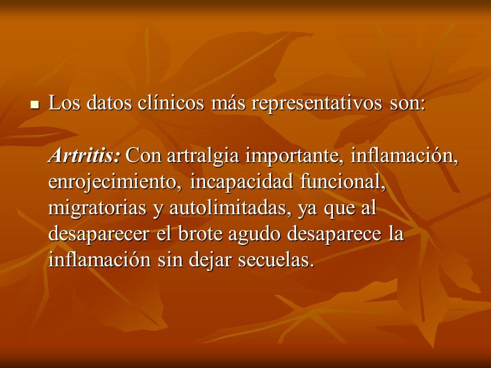 Los datos clínicos más representativos son: Artritis: Con artralgia importante, inflamación, enrojecimiento, incapacidad funcional, migratorias y auto