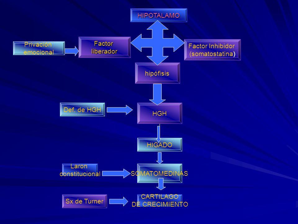 HIPOTALAMO Factorliberador hipófisis HGH Factor Inhibidor (somatostatina) Privación emocional Def. de HGH HIGADO SOMATOMEDINAS CARTILAGO DE CRECIMIENT