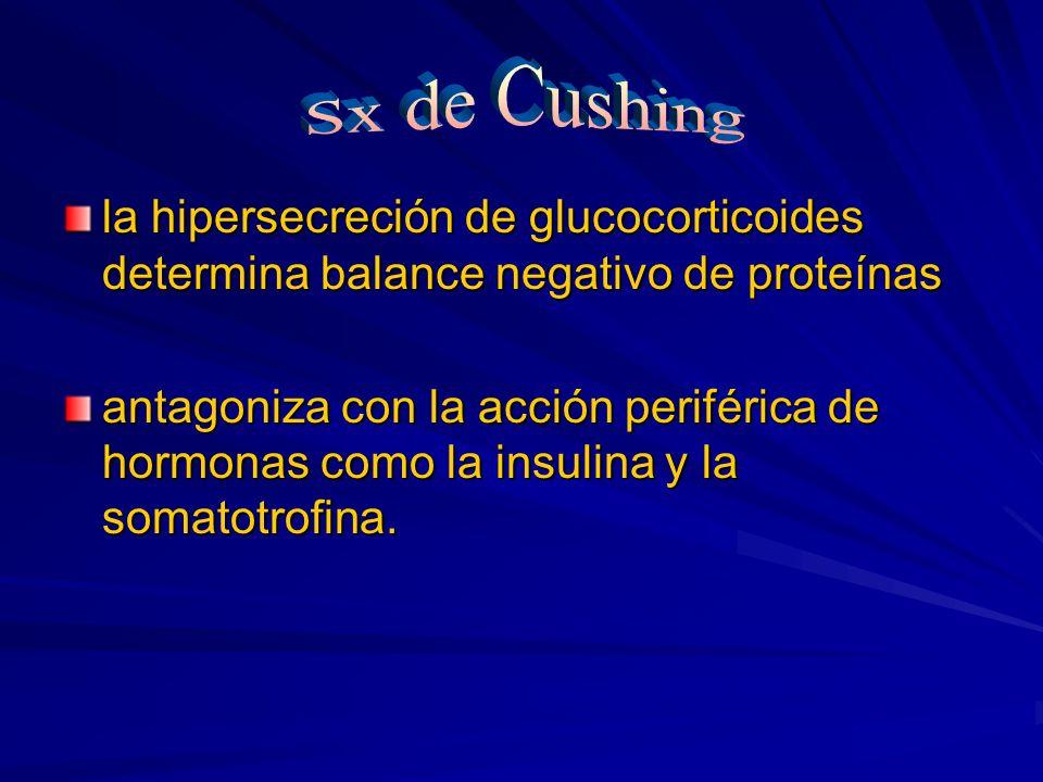 la hipersecreción de glucocorticoides determina balance negativo de proteínas antagoniza con la acción periférica de hormonas como la insulina y la so