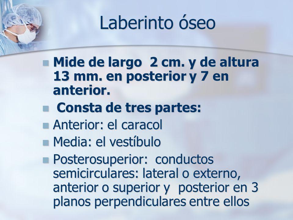 Laberinto óseo Mide de largo 2 cm. y de altura 13 mm. en posterior y 7 en anterior. Mide de largo 2 cm. y de altura 13 mm. en posterior y 7 en anterio