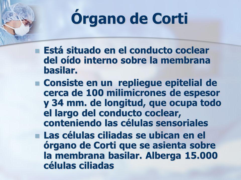 Órgano de Corti Está situado en el conducto coclear del oído interno sobre la membrana basilar. Está situado en el conducto coclear del oído interno s
