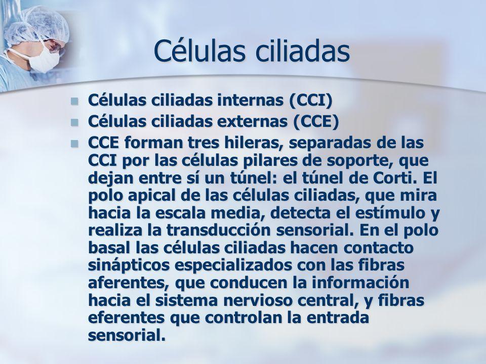 Células ciliadas Células ciliadas internas (CCI) Células ciliadas internas (CCI) Células ciliadas externas (CCE) Células ciliadas externas (CCE) CCE f