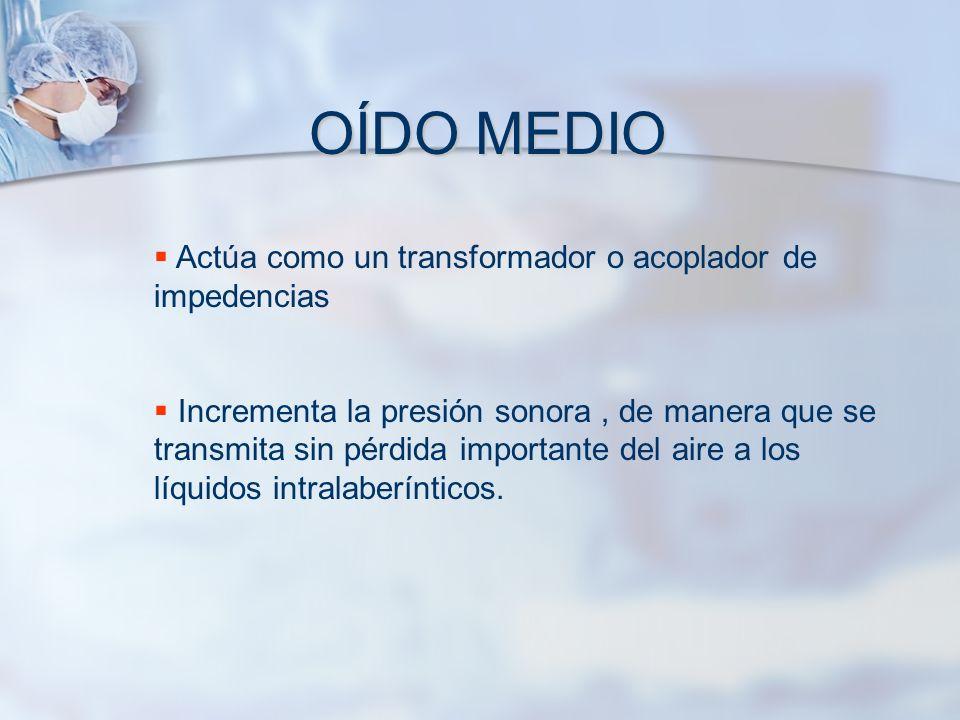 OÍDO MEDIO Actúa como un transformador o acoplador de impedencias Incrementa la presión sonora, de manera que se transmita sin pérdida importante del