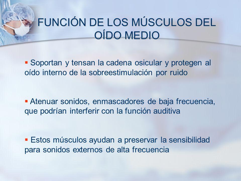 FUNCIÓN DE LOS MÚSCULOS DEL OÍDO MEDIO Soportan y tensan la cadena osicular y protegen al oído interno de la sobreestimulación por ruido Atenuar sonid