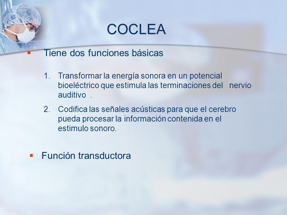 COCLEA Tiene dos funciones básicas 1.Transformar la energía sonora en un potencial bioeléctrico que estimula las terminaciones del nervio auditivo. 2.