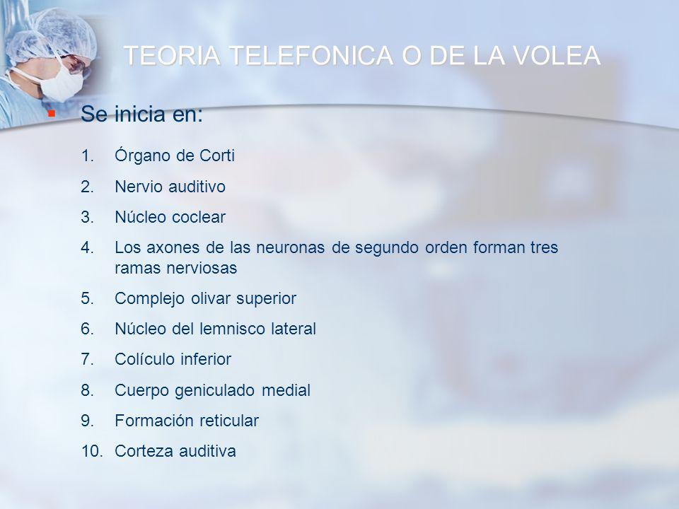 TEORIA TELEFONICA O DE LA VOLEA Se inicia en: 1.Órgano de Corti 2.Nervio auditivo 3.Núcleo coclear 4.Los axones de las neuronas de segundo orden forma
