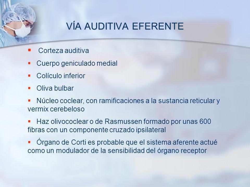 VÍA AUDITIVA EFERENTE Corteza auditiva Cuerpo geniculado medial Colículo inferior Oliva bulbar Núcleo coclear, con ramificaciones a la sustancia retic