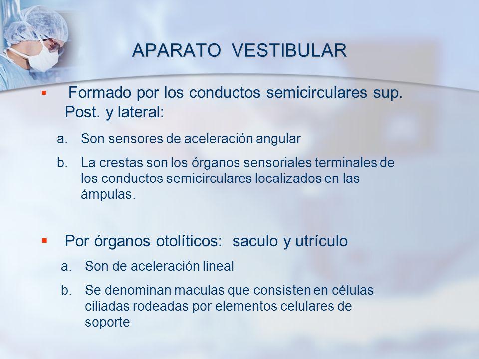 APARATO VESTIBULAR Formado por los conductos semicirculares sup. Post. y lateral: Por órganos otolíticos: saculo y utrículo a.Son sensores de acelerac