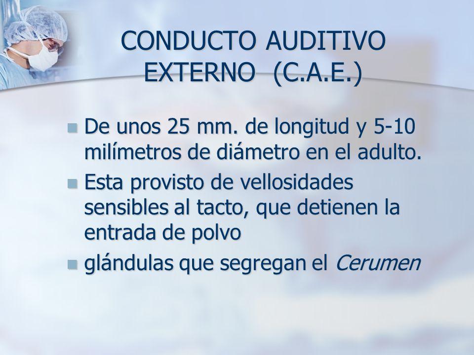 C.A.E.El C.A.E.
