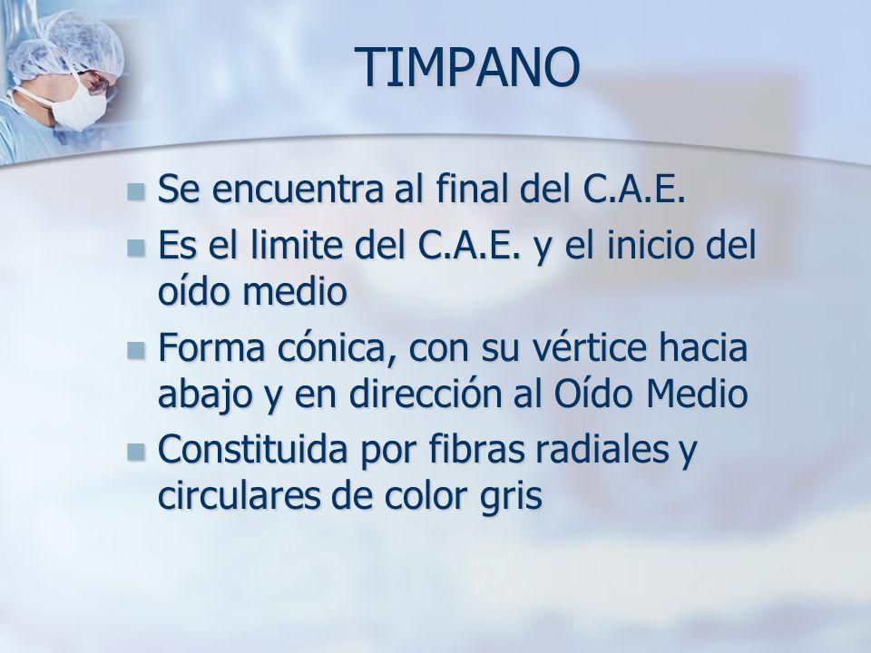 TIMPANO Se encuentra al final del C.A.E. Se encuentra al final del C.A.E. Es el limite del C.A.E. y el inicio del oído medio Es el limite del C.A.E. y